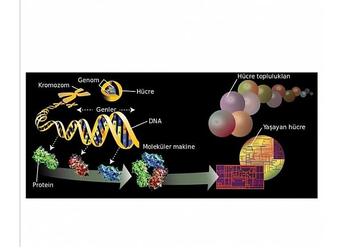 DNA - GEN nedir